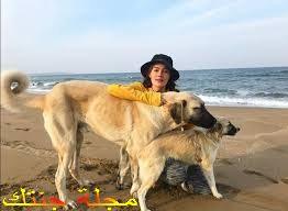 جولبيرا اوزدمير علي الشاطىء مع كلابها المفضلين